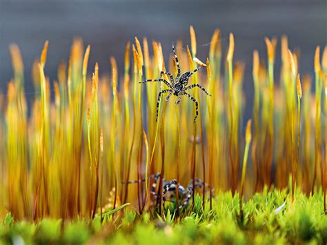 Spider Image, Minnesota | National Geographic Photo of the Day